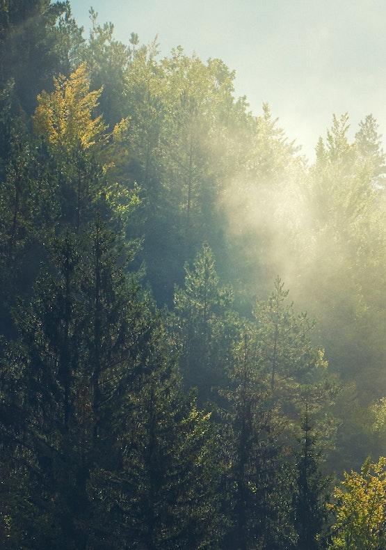 支持国家森林基金会