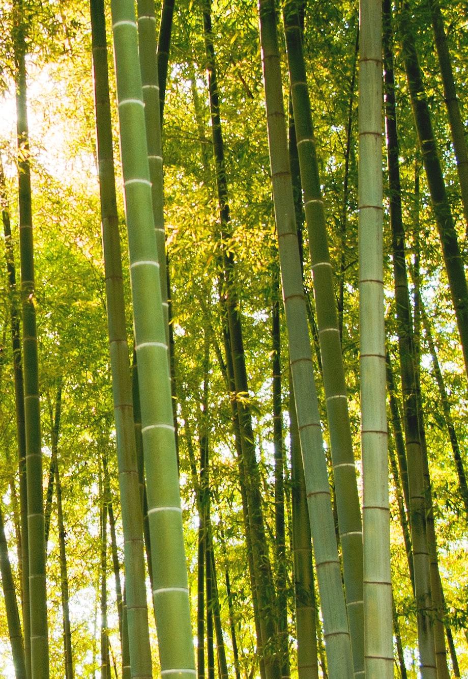 Bamboo Mattress Bamboo Memory Foam Mattress Brentwood Home
